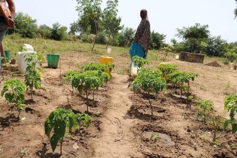 Echange Et Formation En Aménagement Agroforestier 1